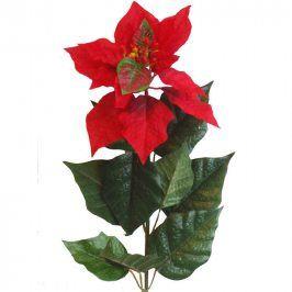 Vánoční hvězda (Poinsettia) 60 cm
