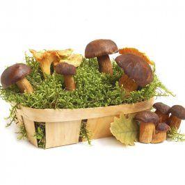 Sadba lesních hub